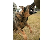 Security dogs trained  by H & H Security