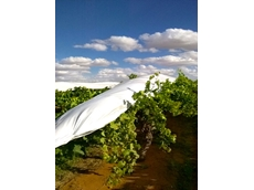 Integrated Packaging's extra-durable grape vine covers.