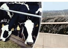 Silage inoculants can enhance a cow's milk producing abilities
