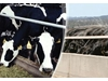 Study finds silage inoculants help cows produce more rumen microbes