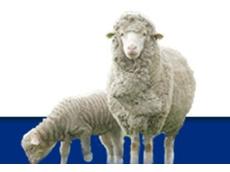 Livestock Contractors Association (LCA)