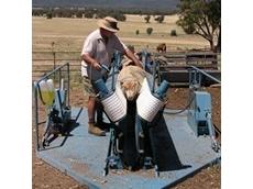 Sheep handling equipment from McDougall Weldments