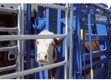Cattle Crushes and Headbails by Metalcorp