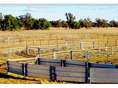 Durable sheep yards by Metalcorp