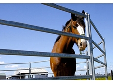 Horse Yards and Horse Panels by Metalcorp Steel