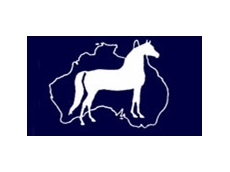 Morgan Horse Association of Australia Inc