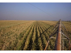 NTAgA is currently conducting a four year maize trial in the NT