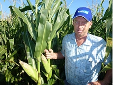 Nic Dibden in his corn crop, which was cut for silage and used in the dairy ration