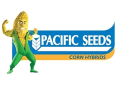 Corn hybrid crops from Pacific Seeds