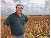 Delungra sorghum growers stick to winning formula