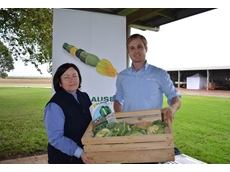 Pacific Seeds' Maree Crawford and Clause Seeds' Eamon McEwan collaborating in the name of vegetable health