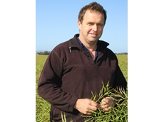 Brian Klowss in his crop of triazine tolerant hybrid canola