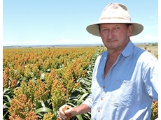 Planting an entire sorghum crop to one variety can be a risky decision, but for Inverell growers Vern and Marg Younger and son Geoff, it was a necessary one.