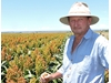 Inverell farmers rely on one variety sorghum program