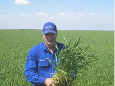 New APH wheat Lancer makes the grade