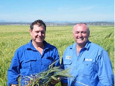 Farming for Kids President Charles Hill and Pacific Seeds territory manager Tony McCumstie check on the wheat's progress