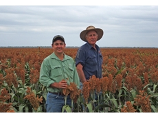 Agronomist Jim Macrae (left) and Ross Hutchinson in the grain sorghum 'Roxborough' supplies to CQ feedlots