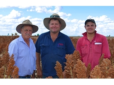​Sorghum comes through for Darling Downs croppers