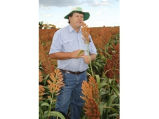 Sorghum grower has rewarding season