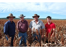 Bill Smith and Bernie Meara with Jeff Lack and his son Jordan in sorghum trials at 'Hunsingore'