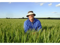 Darren Morrell inspects this season's Cobra wheat at the family farm 'Melrose'