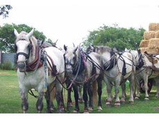 The interests of Percheron horse breeders are catered for by the Percheron Horse Breeders Association of Australia
