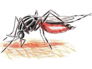Mosquitoes and midges know how to spoil a party