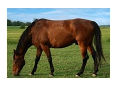 Equivac livestock vaccines from Pfizer prevent tetanus in horses and other animals