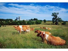 Keep cattle in good health with Phibro's range of antibiotics