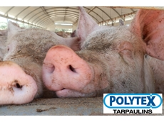 Enhance your Piggery Growing Conditions with Polytex Tarpaulins