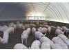 Polytex tarpaulins help poultry and piggery industries reduce their energy consumption