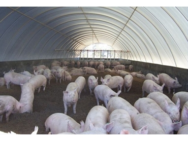 Polytex Tarps are ideal for providing shelter to livestock