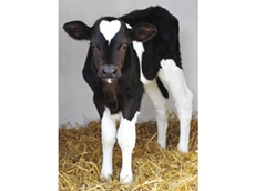 Propharma Soluble Vitamin and Mineral Supplements for Milk Fed Calves