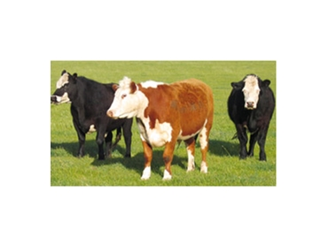 Weatherproof for ease and open grazing