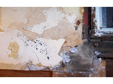 Mould assessment, testing, management and clean up