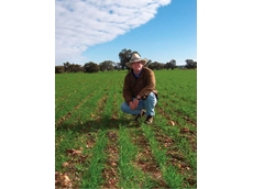 Farmer Matt Barton uses a combination of pasture cropping and dry sowing practices to yield optimal crops in low rainfall seasons
