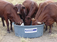 Vitamol based cattle feed supplement provides a balance of minerals and vitamins