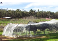 Bird netting for fruit trees
