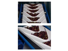 Rydell Supplies Specialised Conveyor Belting for Fruits, Vegetables and Vulnerable Olives
