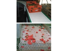 Plastic modular belting for the fruit and vegetable industry