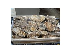 3D vision cameras scan and classify 70,000 oysters per hour