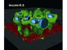 Imaris 6.3 – 3D & 4D Image Analysis & Image Processing Software from Scitech