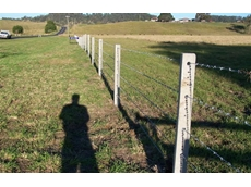 Five barb fence with pre-stressed concrete posts between Lismore and Kyogle