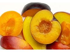 Summerfruit Australia Limited (SAL)