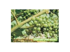 Switch fungicide controls Botrytis