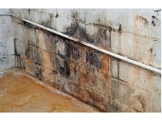 Mould can come in a variety of forms