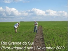 Brazilian Circle for Rice team undertaking research on rice production under pivot irrigation