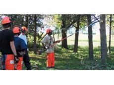 Tree care service