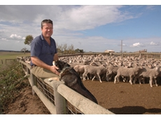 Andrew Heinrich, winner of the 2010 Proud Achievers Award for Sheep, says the Australian sheep industry is second to none